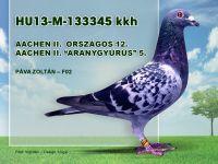 HU13-M-133345-Pava-Zoli-F02