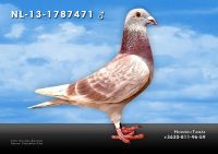 NL-2013-1787471