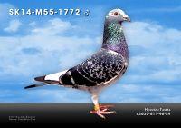 SK14-M55-1772