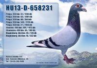 HU13-D-658231-H_1
