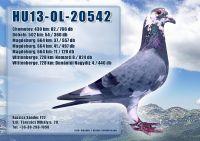 HU13-OL-20542-H_1