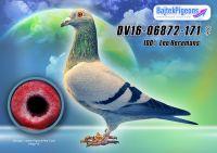 DV16-06872-171-kt-E---OK