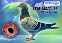 DV16-06872-172-kkh-E---OK