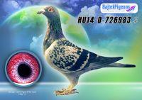 HU14-D-726983-kkt-V---OK2