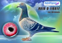 HU16-D-116817-kk-E---OK