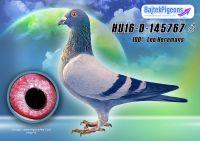HU16-D-145767-kh-E---OK