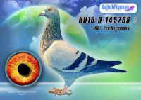 HU16-D-145768-kt-E---OK