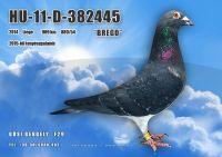 HU11-D-382445-H---OK