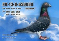 HU13-D-658888-H---OK