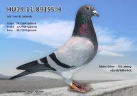 HU14-11-89155-H---OK2