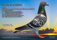 HU16-D-125874-T---OK3