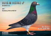 HU16-M-143362--H---OK-REF