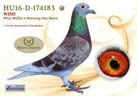 HU16-D-174183-H---OK_resize
