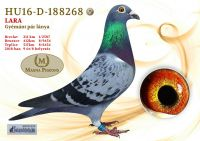 HU16-D-188268-T---OK_resize