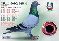 HU16-D-101648-T