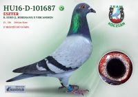 HU16-D-101687-T