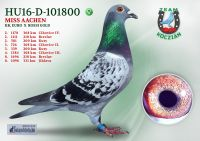 HU16-D-101800-T