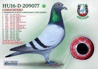 HU16-D-209077-H