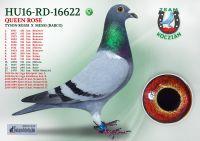 HU16-RD-16622-T