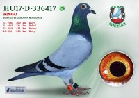 HU17-D-336417-T