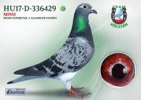 HU17-D-336429-T