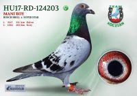 HU17-RD-124203-T