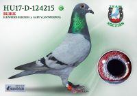 HU17-RD-124215-T