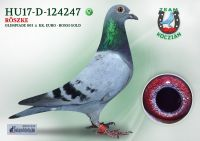 HU17-RD-124247-T