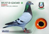 HU17-RD-124340-T