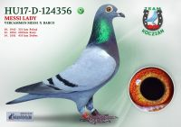 HU17-RD-124356-T