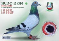 HU17-RD-124392-T